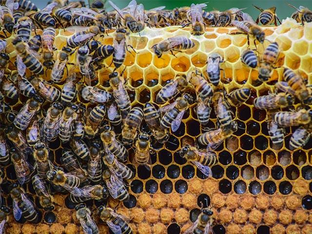 preparate-apicole-products